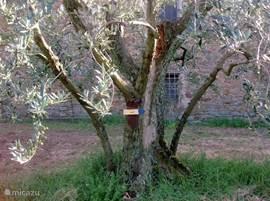 Wandelpaden door de heuvels, velden en olijfboomgaarden