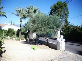 In oktober wordt de olijfboom die in de voortuin staat geplukt. De opbrengst van 2012 was circa 10 kilogram