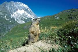 Tijdens je wandeling kan je een alpenmarmot tegen komen. Wij hebben hem al gezien.