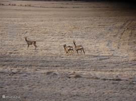 Door de unieke en vrije ligging van het huis kun je soms de herten zien lopen rondom het huis.