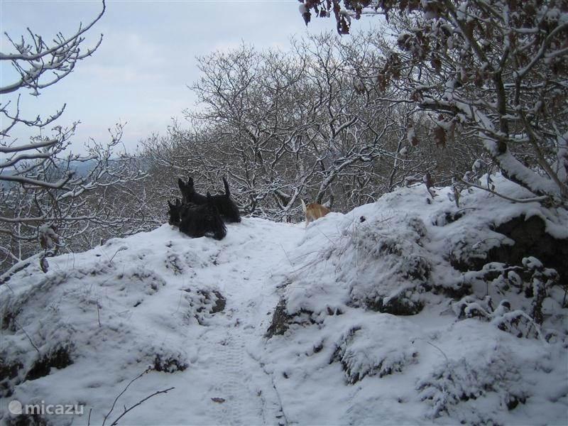 sneeuwfoto van drakenrug