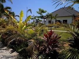 De tropische tuin wordt bijgehouden door de tuinman.