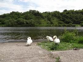 A lovely scene on the Mosel in Kröv