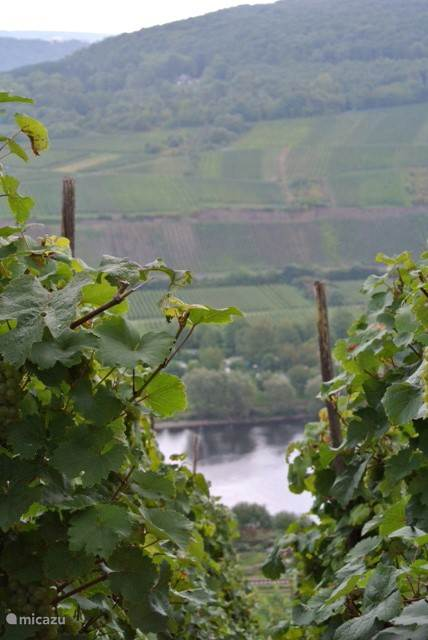 on your walks, you will find a number of occasions this kind vistas through the vineyards.