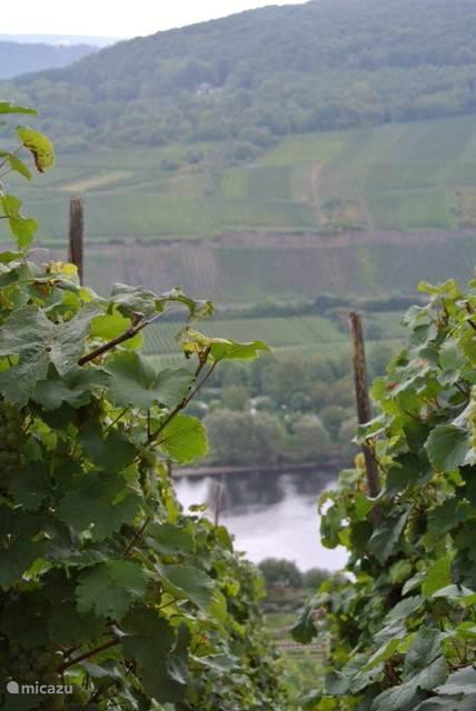 op uw wandelingen treft u diverse keren dit soort doorkijkjes door de wijngaarden.