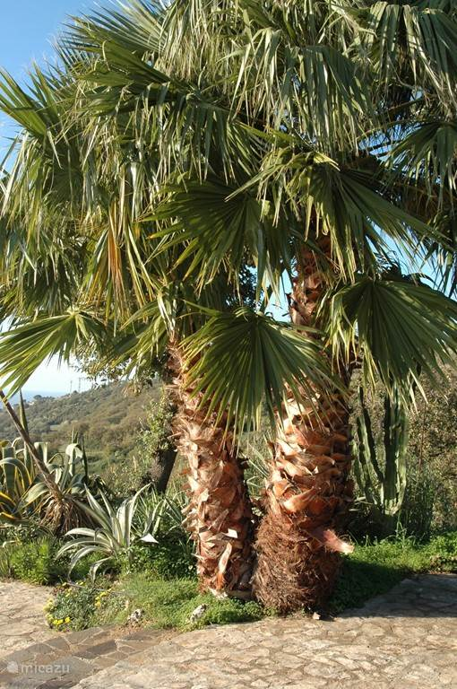Over de razendsnelle groei van deze kanjer van een palm vertellen we onze gasten een zeer bijzonder milieuvriendelijk verhaaltje...