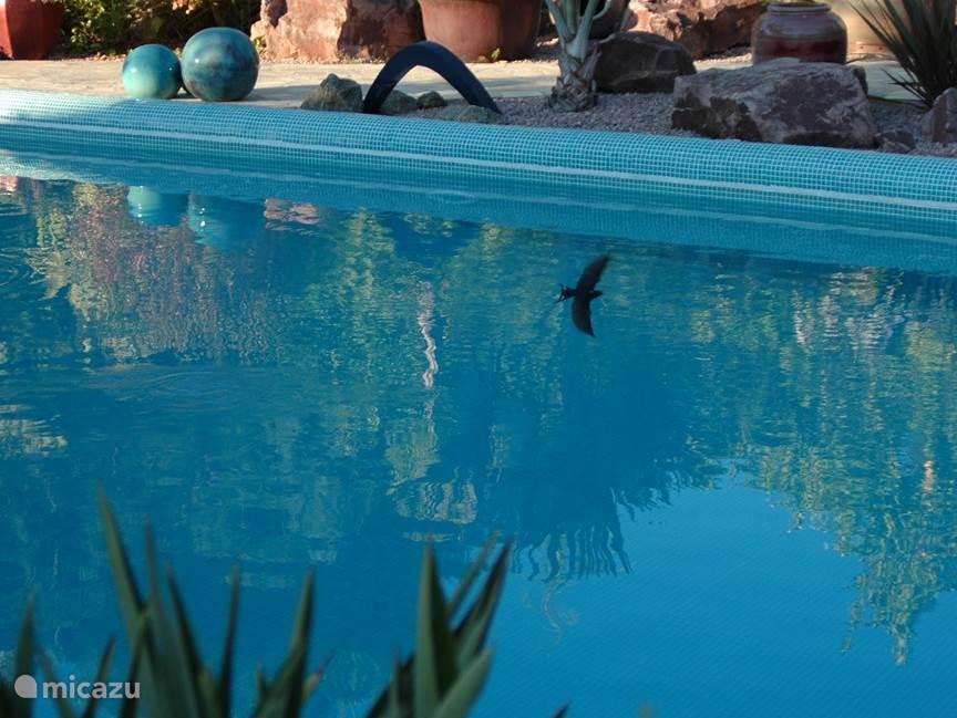 Aan vogels ontbreekt het ons niet in de tuin. Was er in het allereerste begin slechts onkruid en hier en daar een enkel citroenboompje, nu is onze tuin ieder jaar een broedplek voor prachtige zangvogeltjes.  Zwaluwen verlossen ons van de mugjes boven het zwemwater. Ze vliegen laag boven ons hoofd
