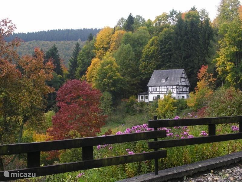Haus im Wiesengrund is SCHITTEREND GELEGEN aan de rand van het bos.