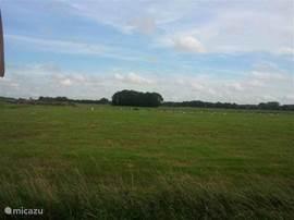 De weilanden van natuurgebied de Loenermark - gezien vanaf het terras.