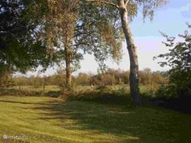 De tuin - privacy, rust, natuur - onze tuin grenst aan het natuurgebied met enkel een zandpad ertussen!