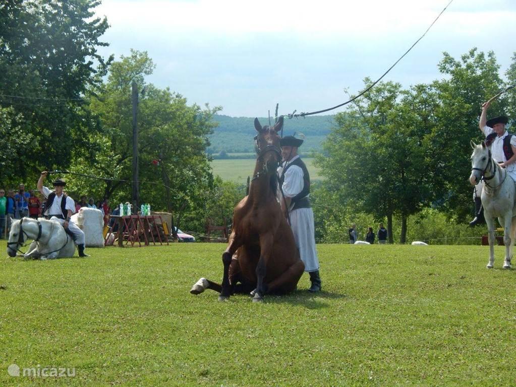 hongaarse paarden show.