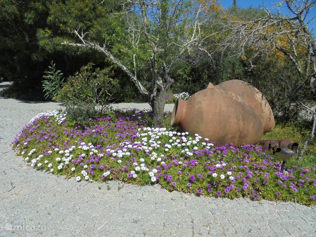 De tuin in het voorjaar