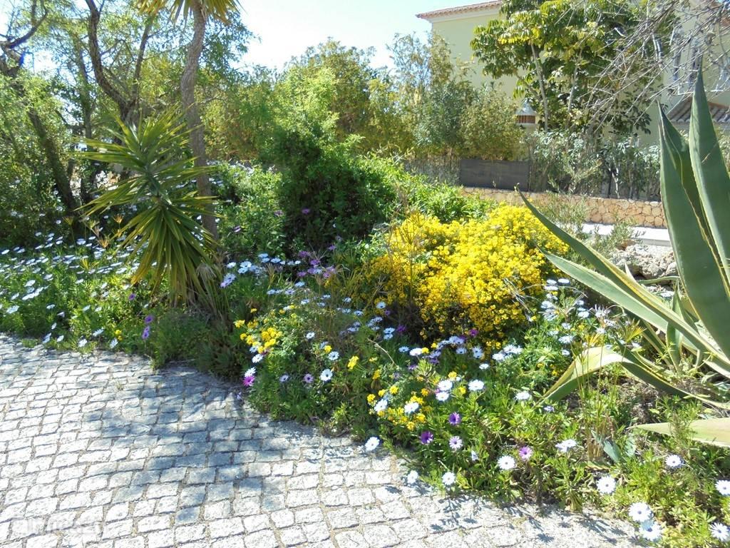 in het voorjaar staat de tuin op zijn best