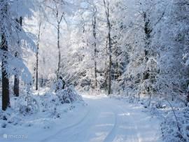 Als er sneeuw gevallen is, is het bos werkelijk sprookjesachtig. Hier een beeld van de oprit.