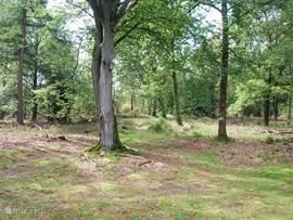 De tuin beslaat een enorm terrein met bos. Zo'n 3 hectare is omheind. Hier kunt u best een hert of ree tegenkomen.