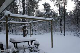 Winter in de tuin