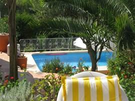 Zwembad gezien vanaf de pergola