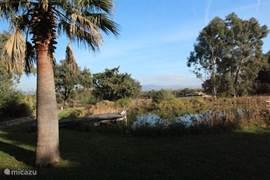 Het natuurzwembad  van 15m x 22m. met prachtige palmbomen er om heen