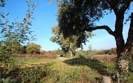 Het pad naar de VILLA en de STUDIO leidt via de wijngaard