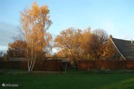 Ook in de herfst, wanneer het blad kleurt.
