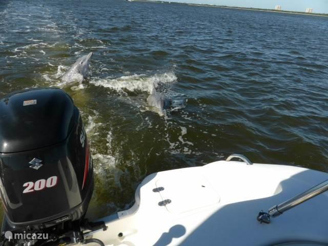 De dolfijnen zwemmen met u en de boot mee. Een geweldige ervaring. Deze foto is door gasten genomen in november 2014. Een momentopname. In werkelijkheid zwemmen de dolfijnen vele kilometers mee..Je kunt ze bijna aanraken.