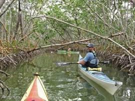 Met een kajak de mangroven en kanalen verkennen? Samen met een manatee (zeekoe) of dolfijn varen?Dat kan. U kunt bij ons een- en tweepersoons professionele kajaks huren. Geef het aan bij uw reservering. De kayaks liggen bij aankomst in Villa Pal Breeze voor u klaar op het boatdeck. Zie ook onderstaa