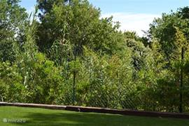 Achterkant tuin