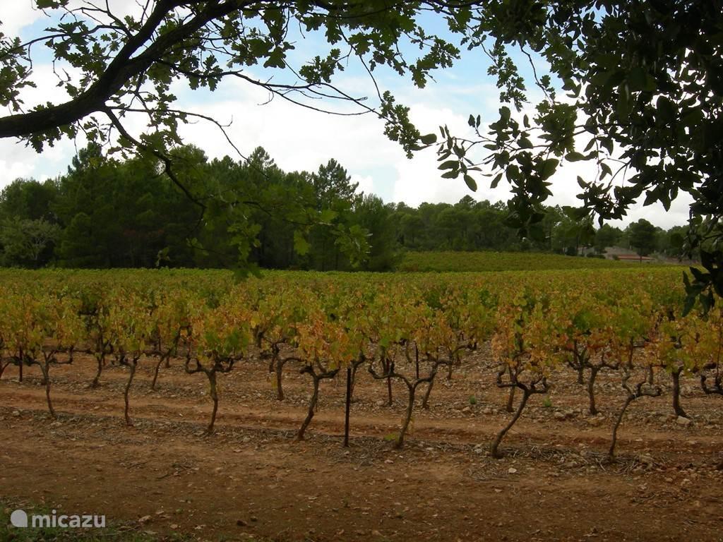Culinair en wijn