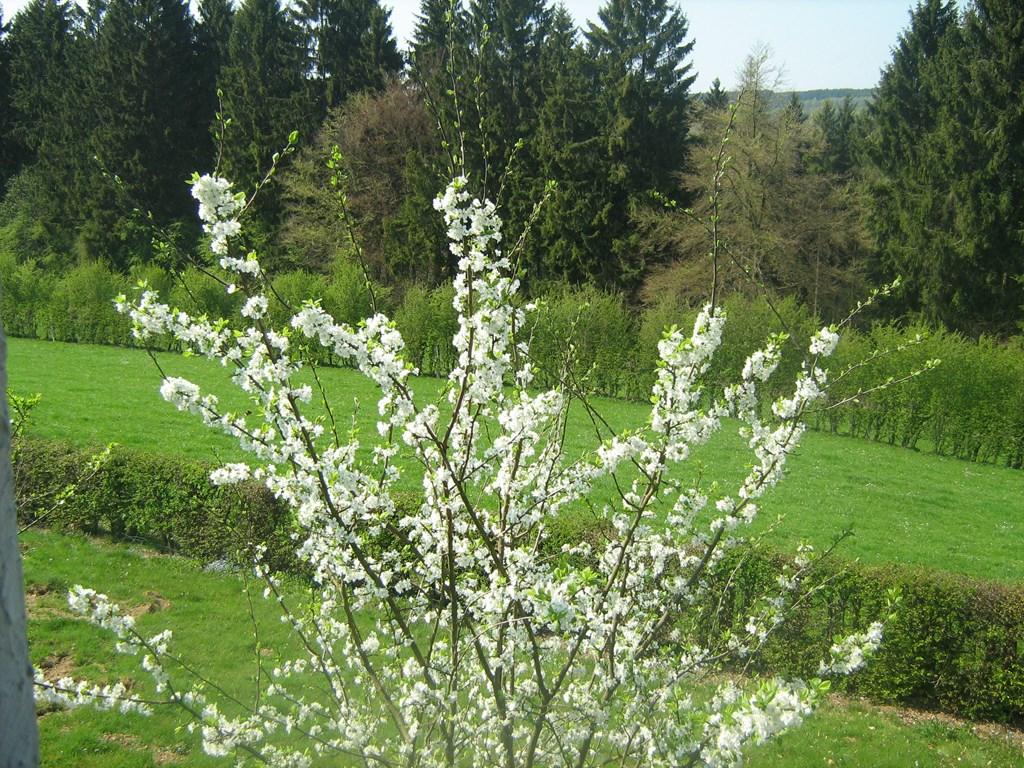8/6-15/6,  Korting 10%  Mooiste  dichtstbijzijnd gebied van de Belg. Ardennen: wandelingen direct vanaf Chalet, fietsen,mountainbiken, Watersport!