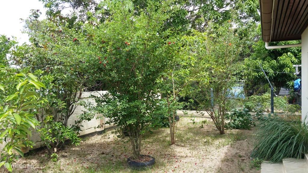achtertuin met fruitbomen
