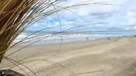 Strand Callantsoog is een prachtig uitgestrekt strand waar u heerlijk kunt zwemmen en zonnen, maar ook activiteiten zijn zeker mogelijk. Vanaf het park ongeveer 5-10 minuten wandelen.