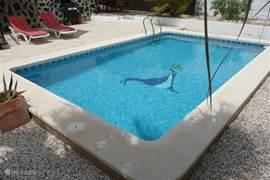 Het zwembad in de achtertuin