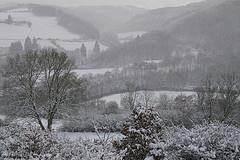 landschap in de sneeuw