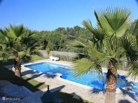 Het gezamenlijke zwembad omgeven door mooie palmbomen. Ligstoelen en douche zijn voor iedereen beschikbaar.