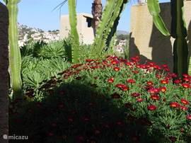 Cactussen en bloeiende planten wisselen elkaar af.