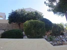 De tuin is afwisselend ingericht met vele bijzondere planten en doorkijkjes.