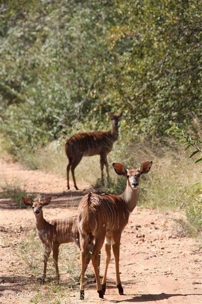 Op safari in je eigen achtertuin