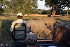 Op safari in het Kruger Park Zuid-Afrika