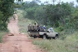 Leeuwen spotten tijdens een safari
