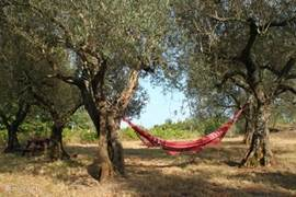 Lazing down olive grove overlooking lake.