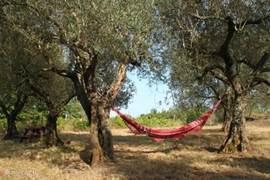 Lekker luieren beneden in olijfgaard met zicht op meer.