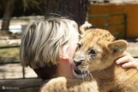 Bioparc Valencia - leuk voor de kinderen-als je geluk hebt kan je de dieren zien voederen.