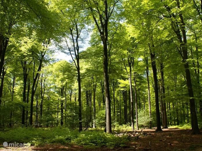 Wandelen in de mooie bossen in de directe omgeving van Le Tableau Vivant. Ieder jaargetijde heeft zijn charme. Er zijn diverse wandelroutes beschikbaar.