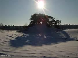 En met dit winterse sfeerplaatje sluit ik de reeks af en wil ik u uitnodigen om misschien zelf eens op verkenningstocht te gaan door bossen, heidevelden en zandverstuivingen. Er liggen er genoeg hier voor iedereen, de eerste al binnen tien minuten fietsen.
