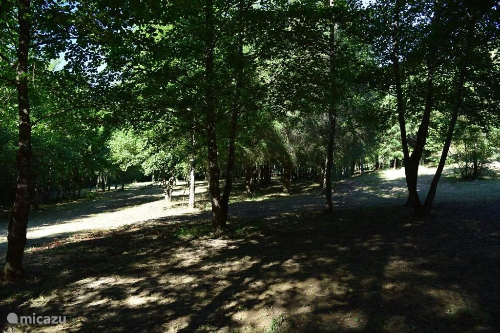 Privé park rondom het huis.