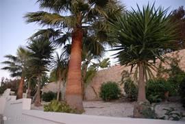 In de voorzijde van de tuin staan prachtige palmbomen
