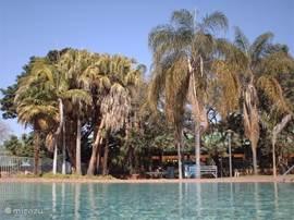 Schitterende oude bomen om het zwembad.