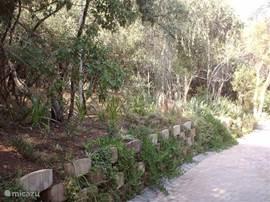 Uitzicht vanaf het terras naar het bos/bushveld waar u kunt genieten van de vogels, apen, impala's enz