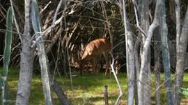 Bos/bushveld uitzicht vanaf ons terras