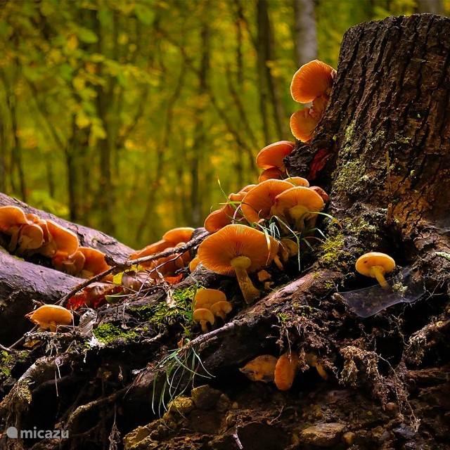 De Hunsrück op z'n best in de herfst.